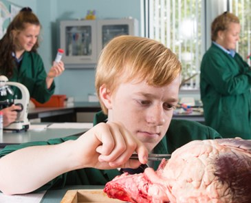 AC - DISSECTING A BULL'S HEART IN BIOLOGY CLASS AT GLENALMOND COLLEGE
